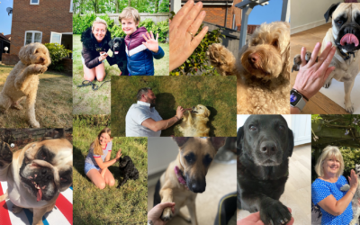 Suffolk Dog Day launch a new furry fundraiser – The Paw Power #Gimme5 Challenge
